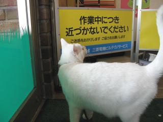 エレベーター点検pictIMIMG_1302.jpg