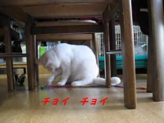 テーブルの下でちょいちょいpictIMIMG_144611.jpg