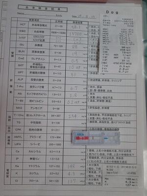 プードル10血液検査IMG_3685.jpg