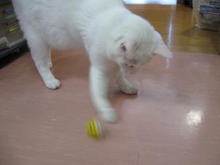 ボールみつけて遊ぶpictIMIMG_1581.jpg