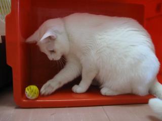 ボールをコロコロpictIMIMG_1577.jpg