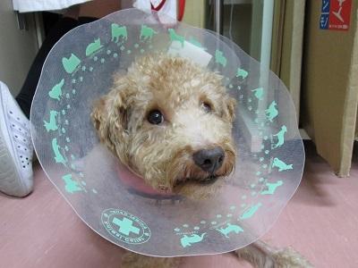 保護犬72IMG_4456.JPG