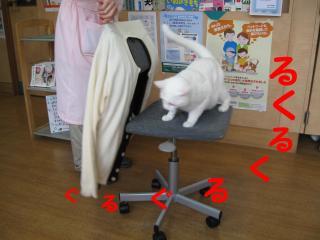 椅子でくるくるpictIMIMG_14951.jpg