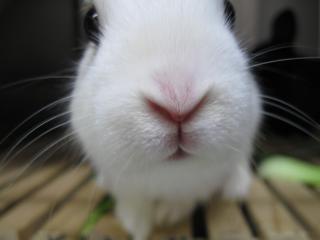 鼻でかウサギpictIMIMG_0554.jpg