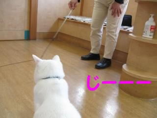 n1じーーーpictIMG_4313.jpg
