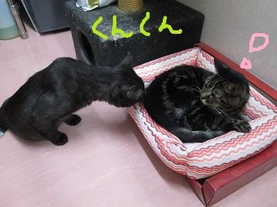 C2くんくんIMG_0284.jpg