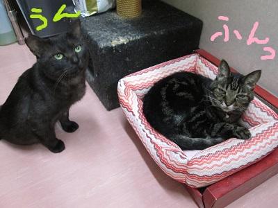 C4うんIMG_0285.jpg