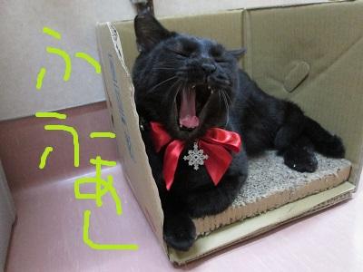 D3ふふぁーIMG_1478.jpg