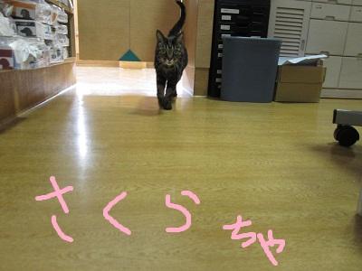 J1さくらIMG_1732.jpg
