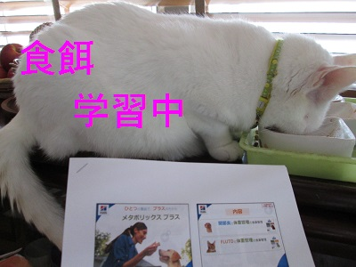 K3食餌学習中IMG_0675.JPG