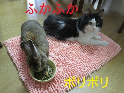 L3ふかふかIMG_0527.JPG