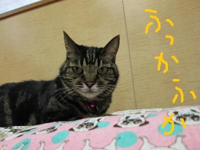 N2ふっかふかIMG_4788.jpg