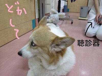 N4どかしてIMG_0596.JPG