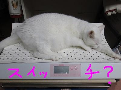 P1スイッチIMG_5240.JPG