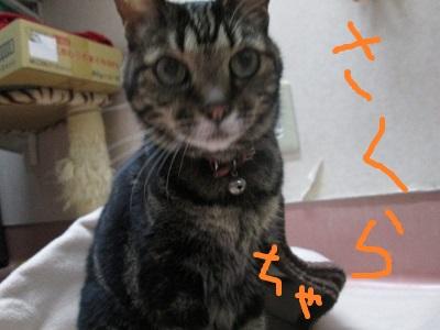 R4さくらちゃIMG_0851.JPG