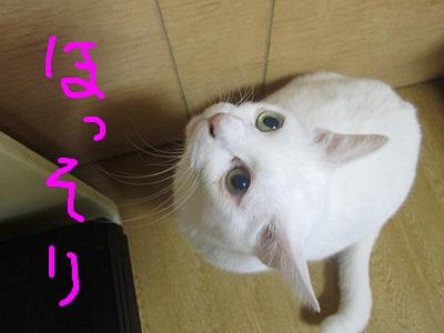 S4ほっそりIMG_0940.JPG