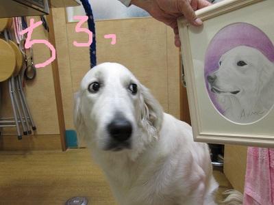 T3ちろっIMG_1150.JPG