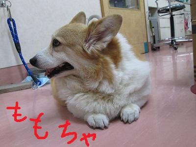 b1ももちゃんIMG_5694.JPG