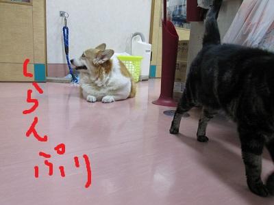 b3ももちゃんIMG_5693.JPG