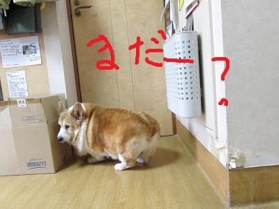 c3まだーIMG_5832.JPG