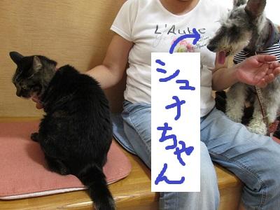 f3シュナちゃんIMG_6842.JPG