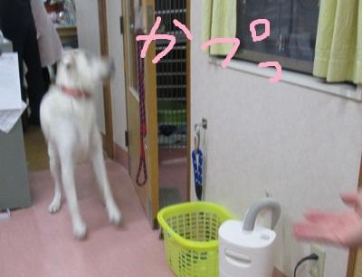 g3かぷつIMG_1603.JPG