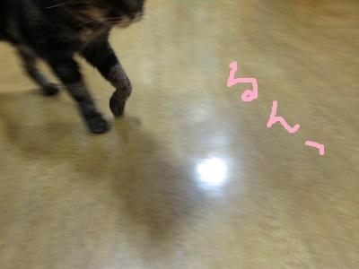 g6るんIMG_7415.jpg