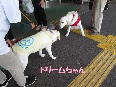 j2ドリームちゃんIMG_2333.JPG