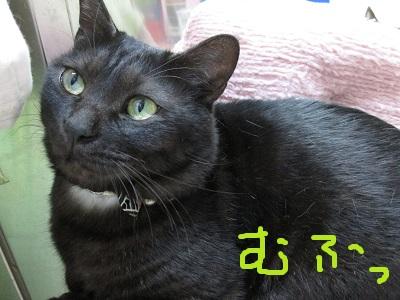 p3むふっIMG_2167.jpg