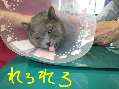 p3れろれろIMG_4493.jpg